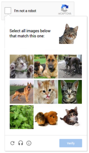 no_captcha_recaptcha_gatto